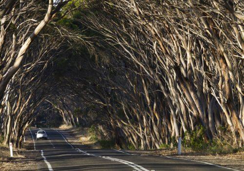 Kangaroo Island Guide